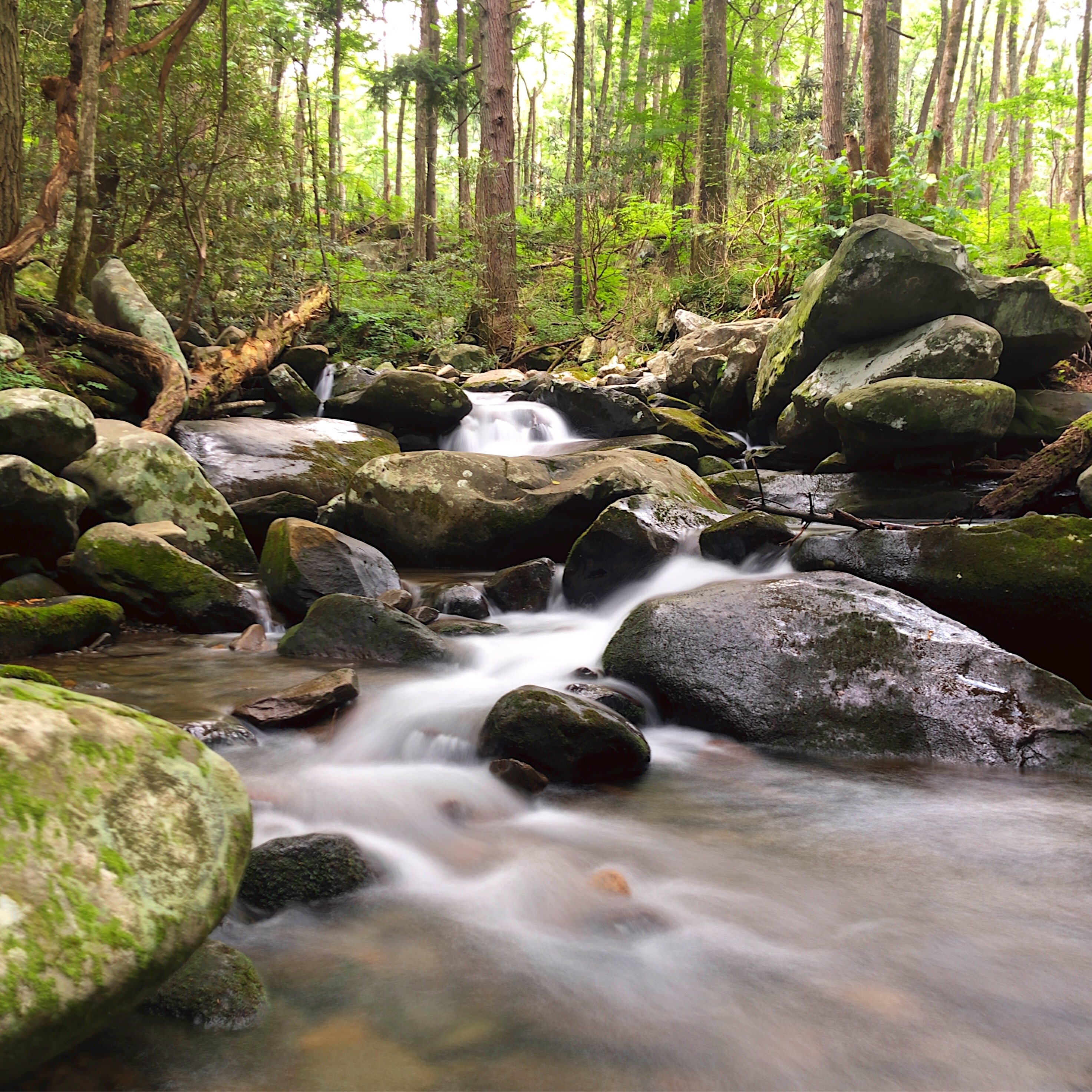 Great Smoky Mountains National Park, Gatlinburg, Tennessee.- Featured Shot